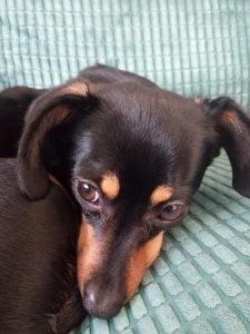 Scared dog, relaxed dog, animal communication Ruthy Doolittle