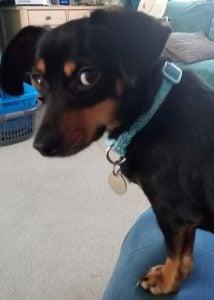 Scared Dog Animal Communication Ruthy Doolittle