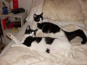 Sophie and Bobby, Animal Communication