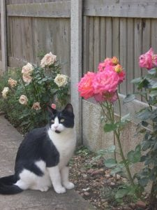 Sophie the cat, smelling the roses animal communication