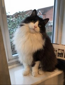 animal communication, cat chat, rescue animals, cat bond, past life connection, animal healing, Ruthy Doolittle, Ruthy Dolittle, ruthie dolittle, Essex