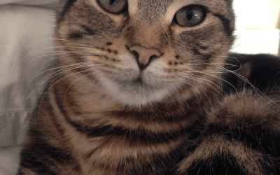 What Makes Cats the Perfect Pets?