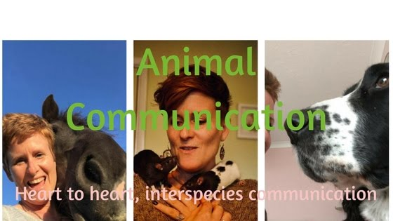 What is Animal Communication?