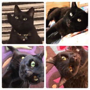 Ruthy Doolittle's cats