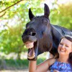 Harry the Horse, Winter Wellness Retreat, Ruthy Doolittle and Sarah Elizabeth Ltd