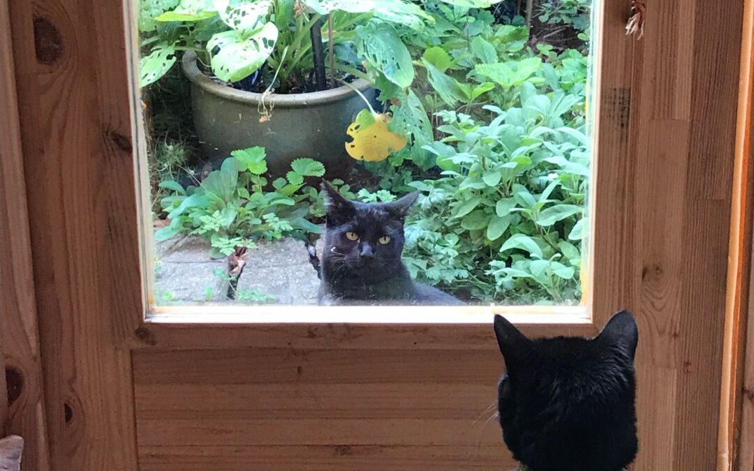 Two Cats Staring at Each Other