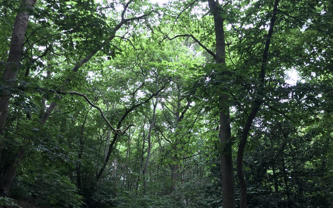 Ruthy Doolittle; Eternal Love for Trees
