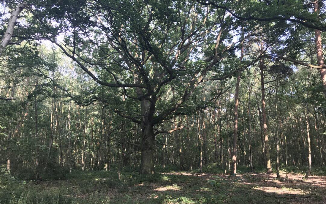 A Billion Trees Please