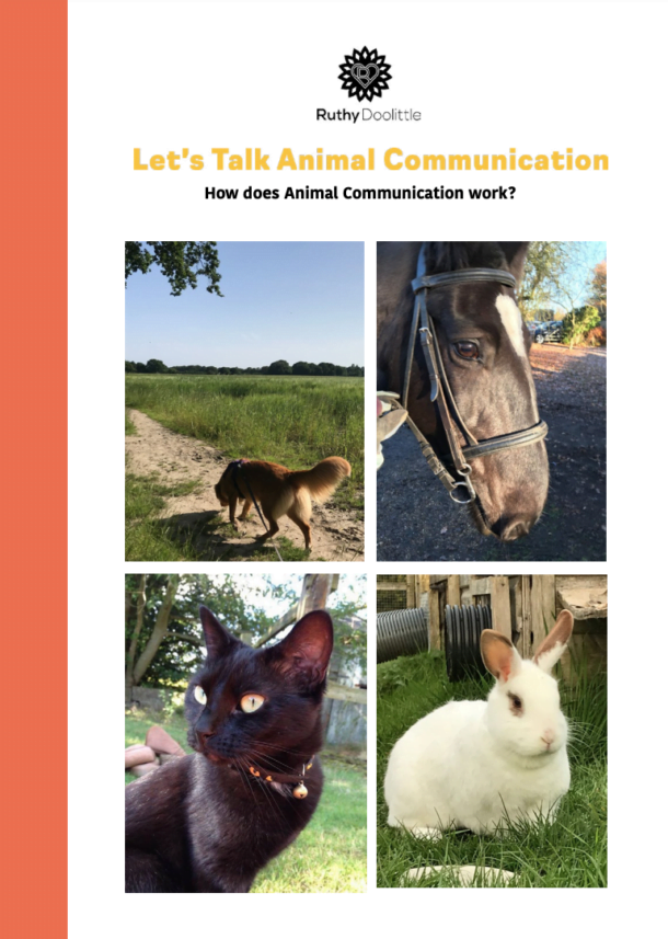 How does Animal Communication Work?