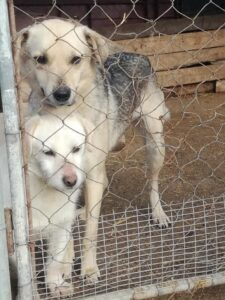 Buttercup with friend in rescue