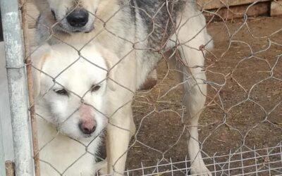 Adopting a Bulgarian Rescue Dog