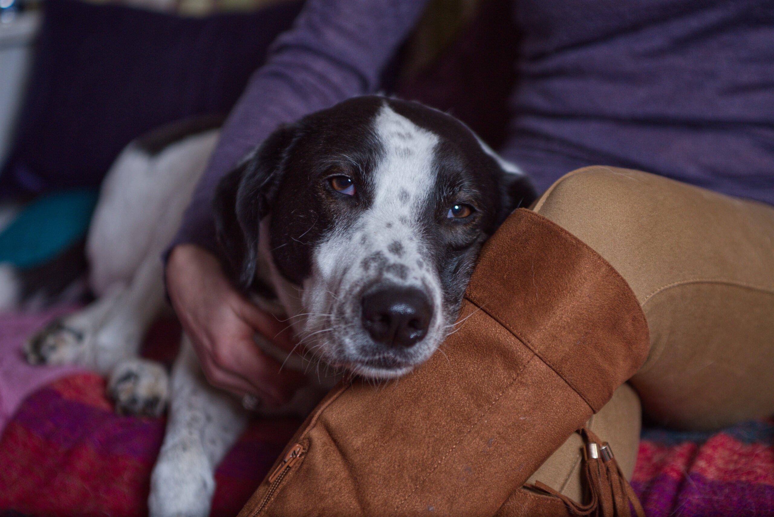 Ruth Doolittle Animal Communicator with Marshall her dog